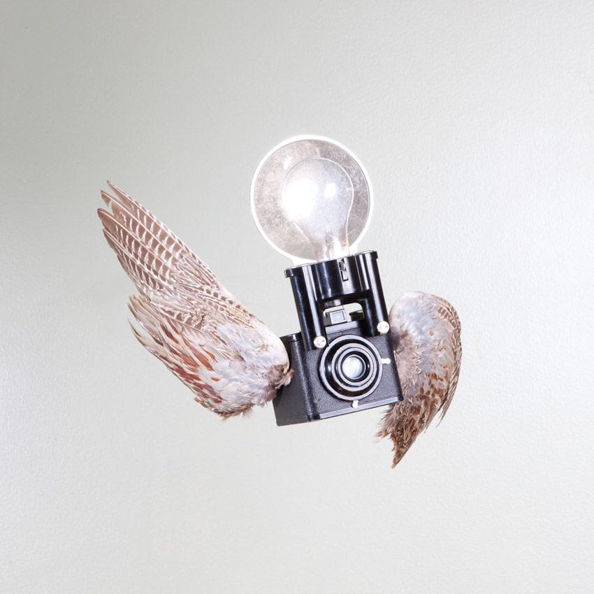 octavious-birds-of-aperture-01